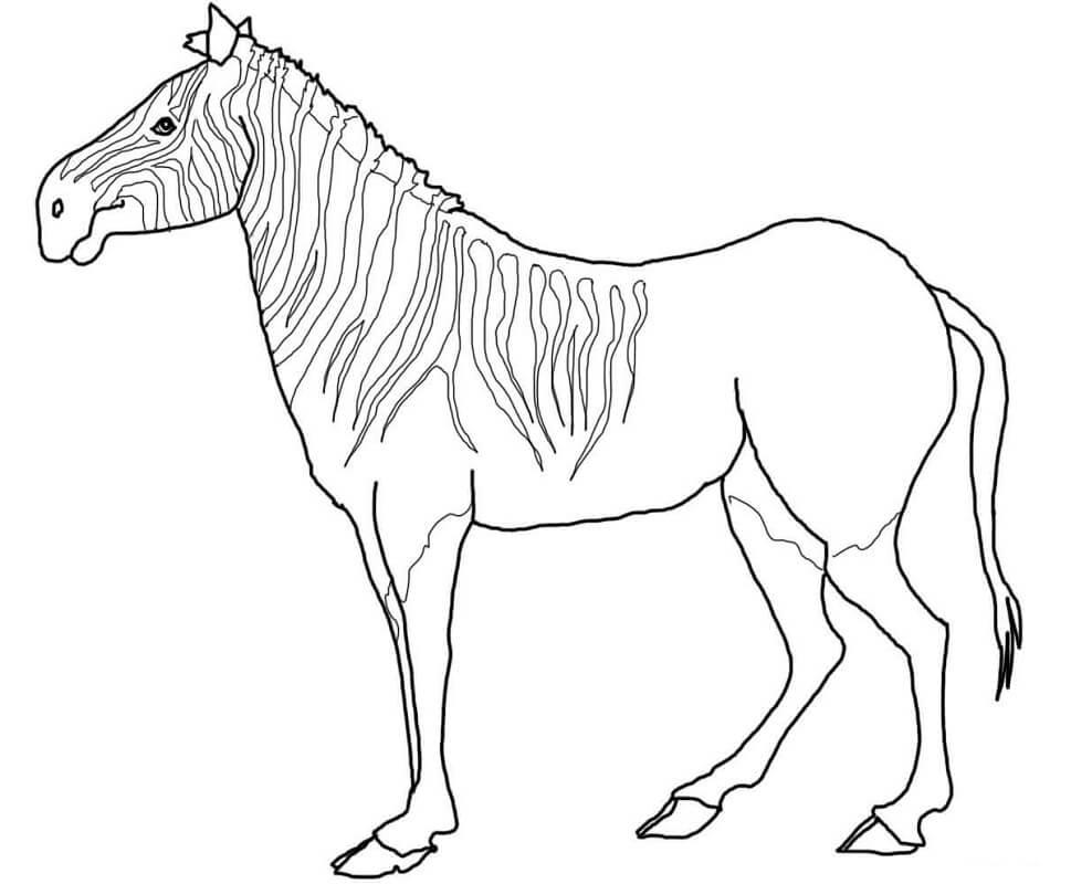 Раскраска дикая зебра 7