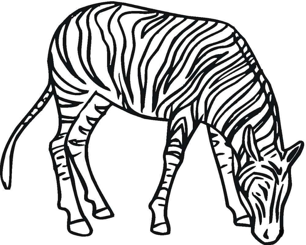 Раскраска дикая зебра 9