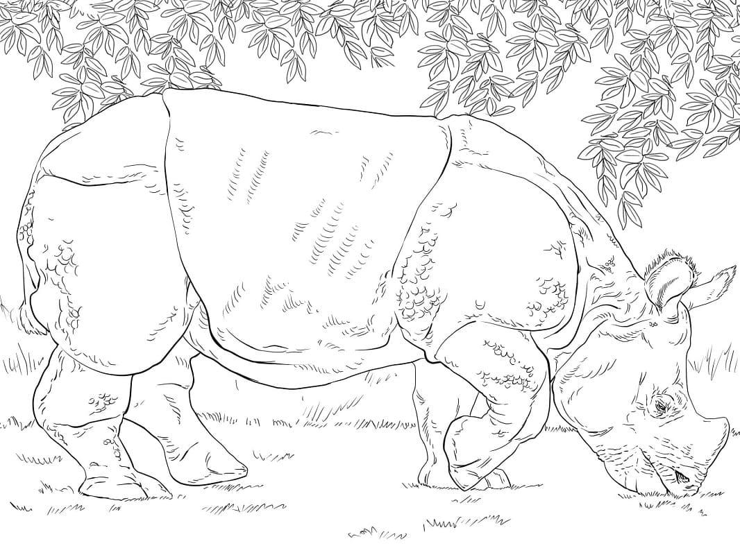 Раскраска дикий носорог 1