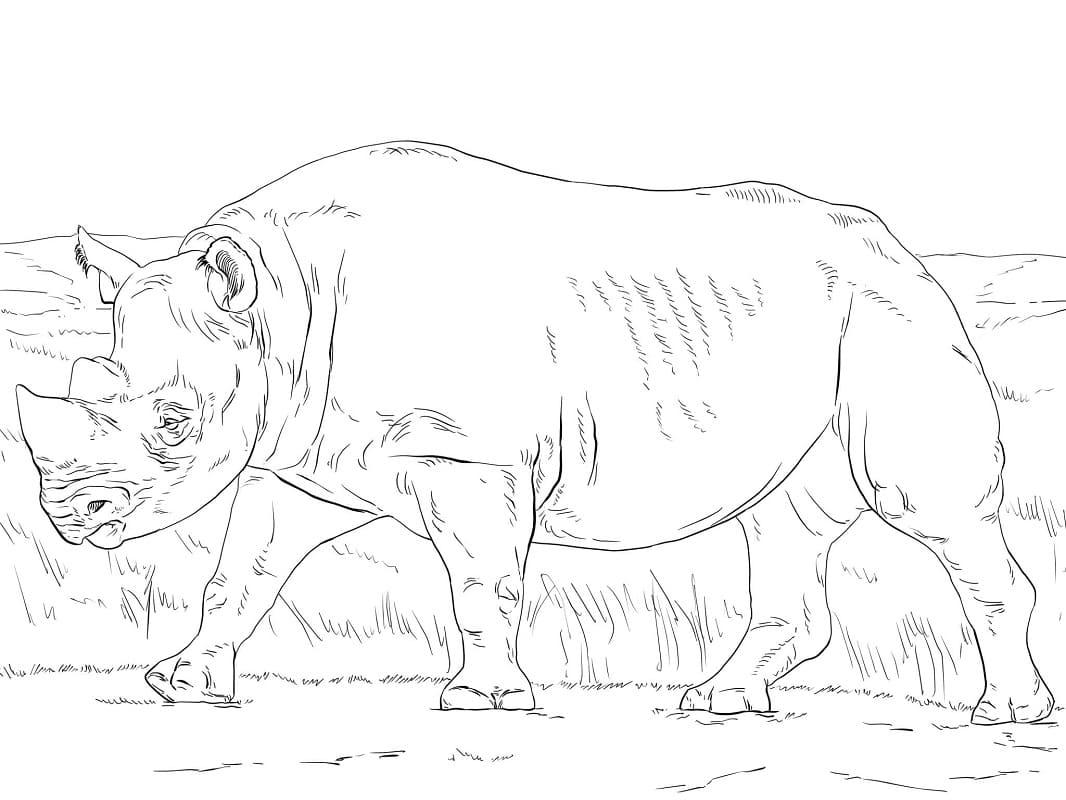 Раскраска дикий носорог 2
