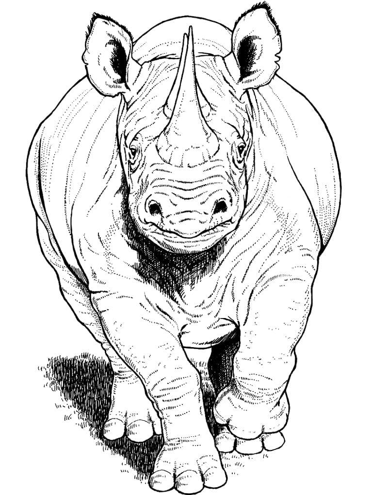 Раскраска дикий носорог 3