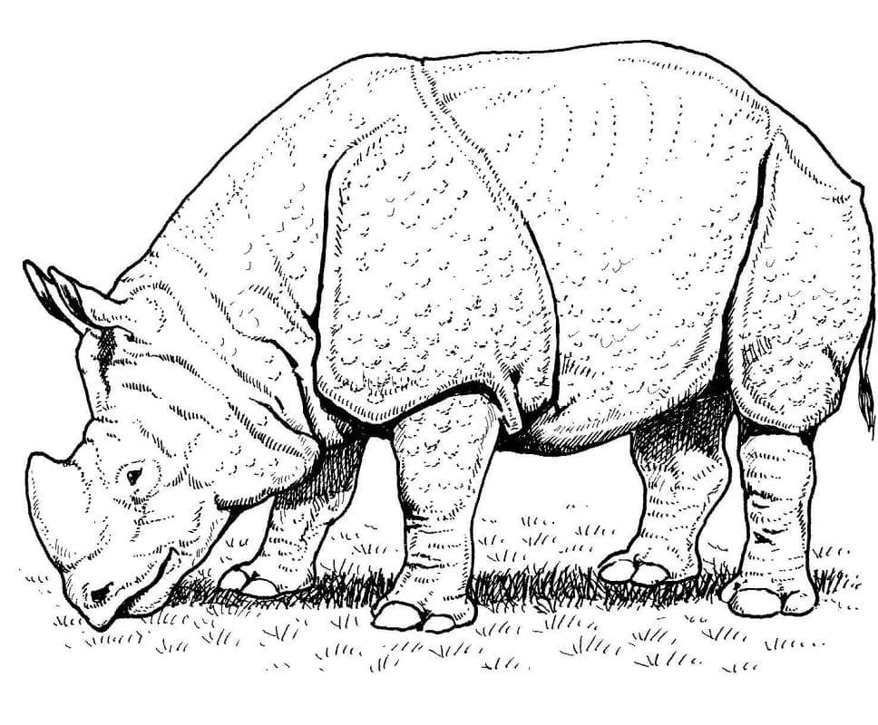 Раскраска дикий носорог 4