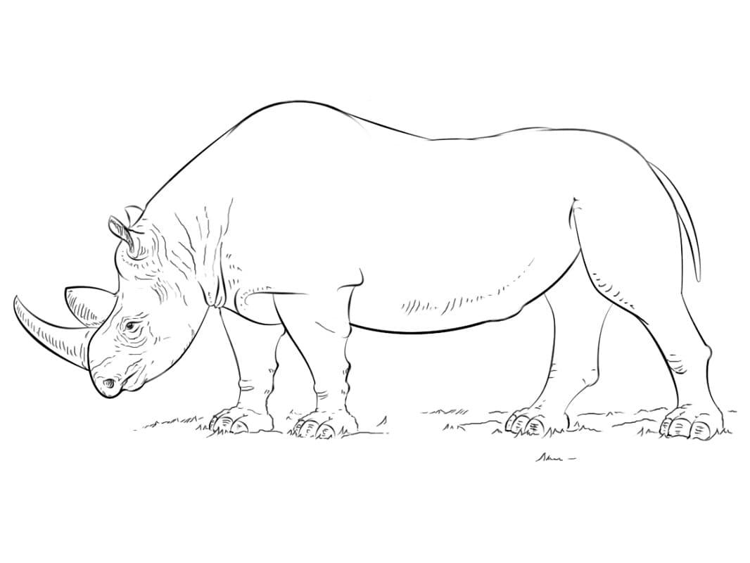 Раскраска дикий носорог 5