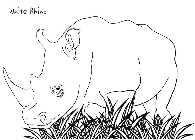 Раскраска дикий носорог