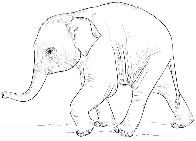 Раскраска дикий слон 1
