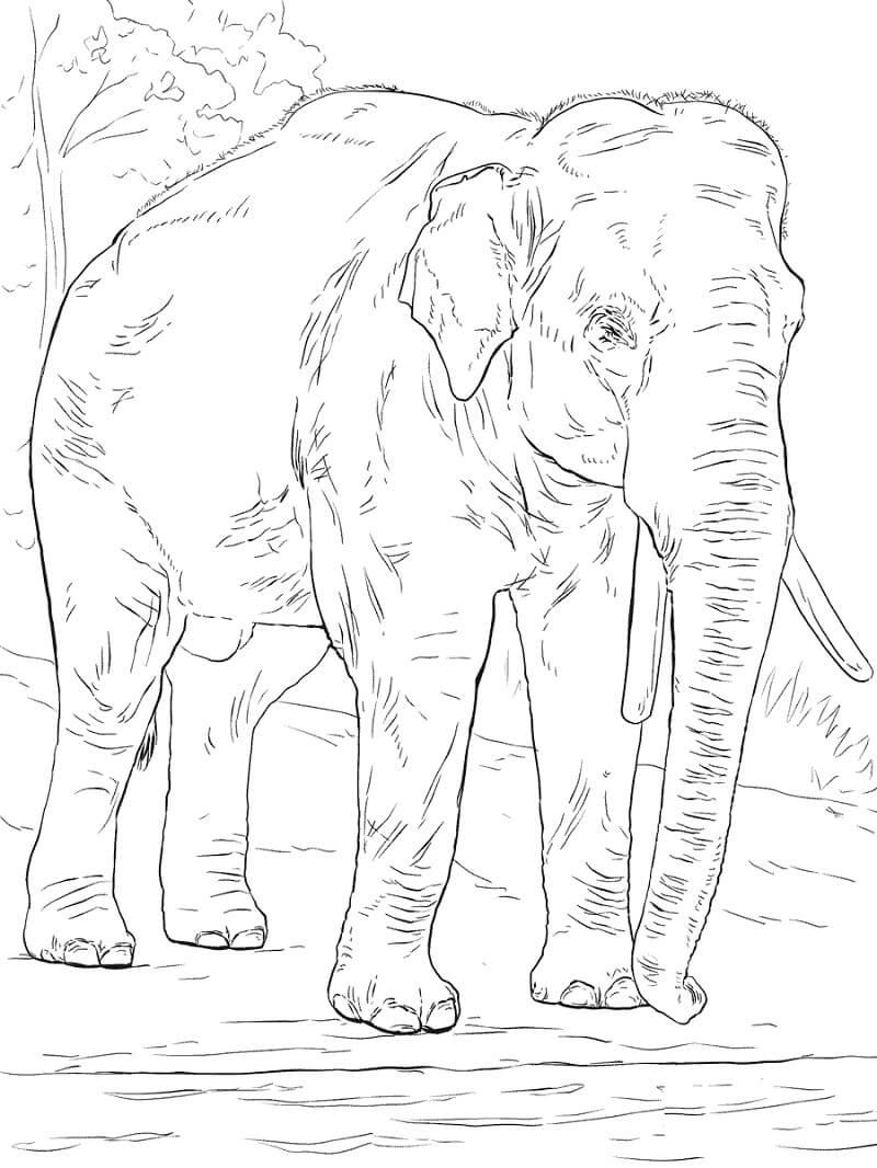 Раскраска дикий слон 2