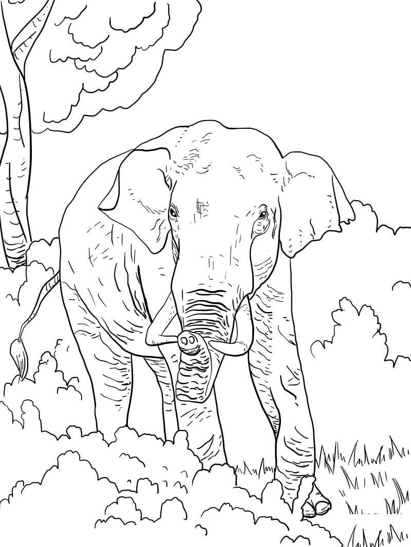 Раскраска дикий слон 3