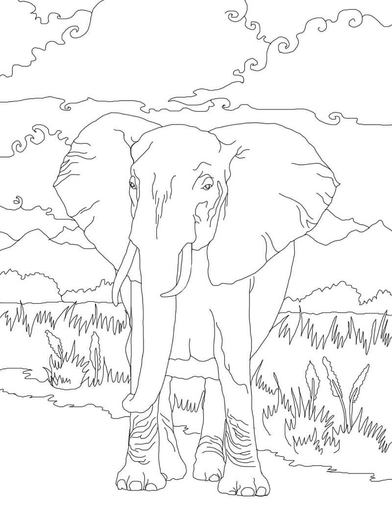 Раскраска дикий слон 4
