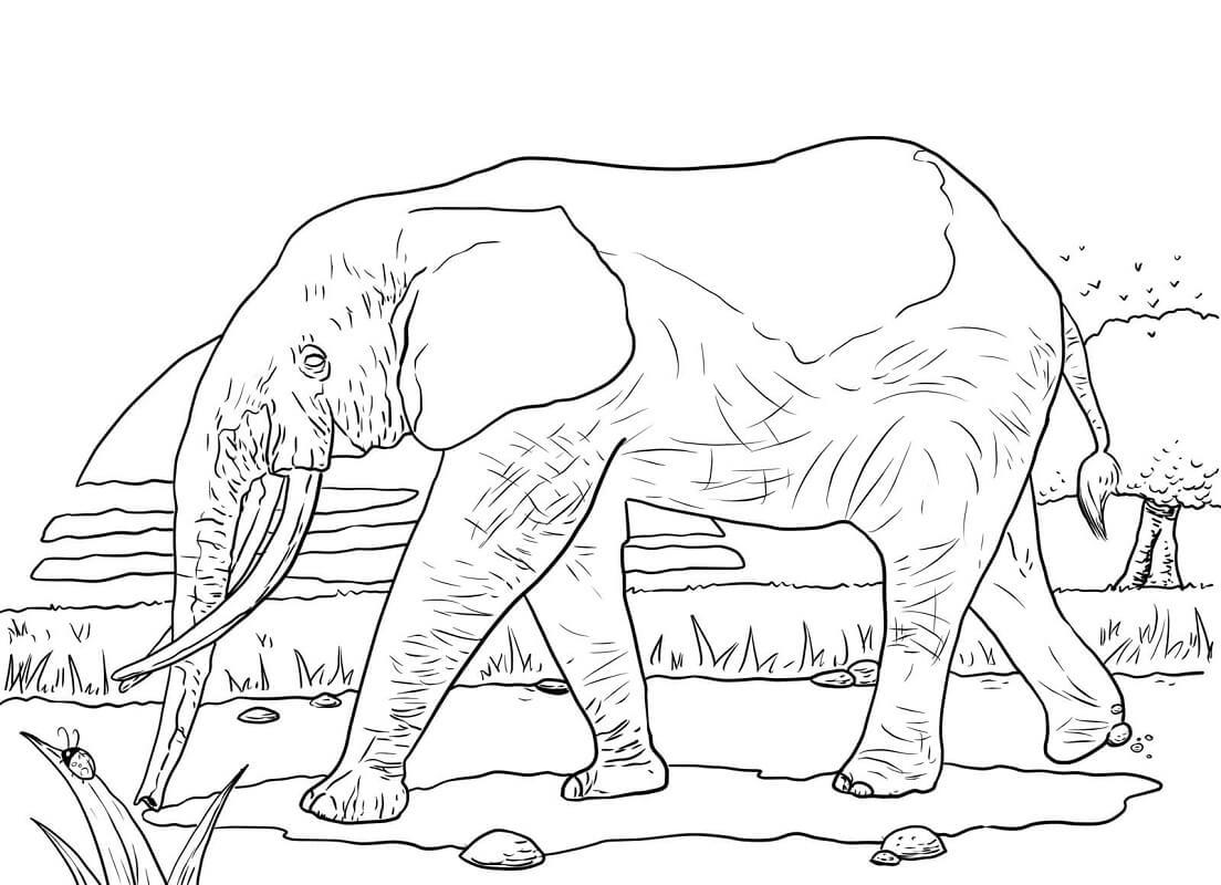 Раскраска Раскраски слон