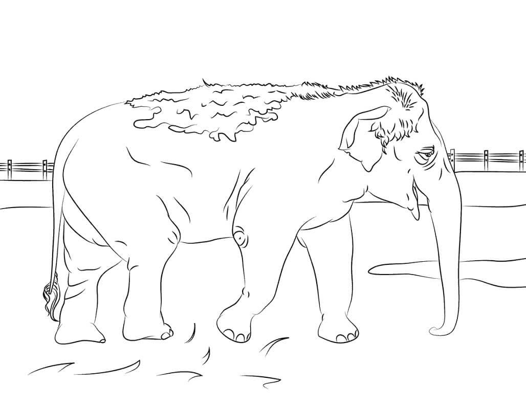 Раскраска дикий слон 6