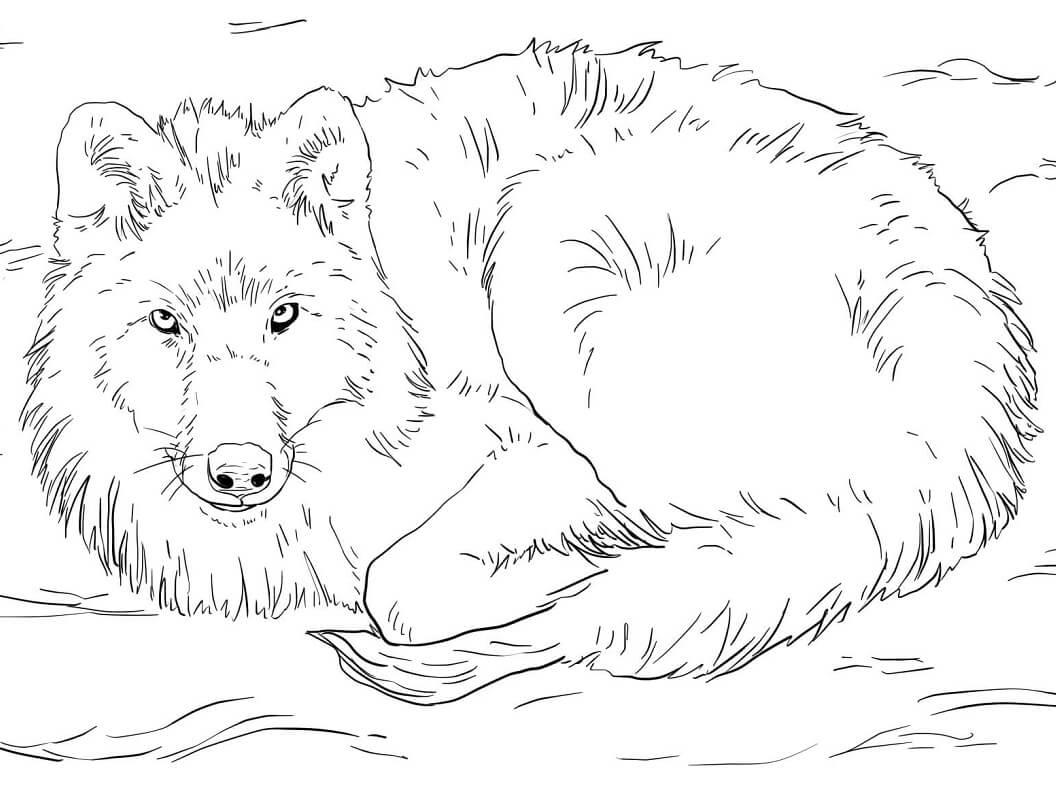 Раскраска дикий волк 1
