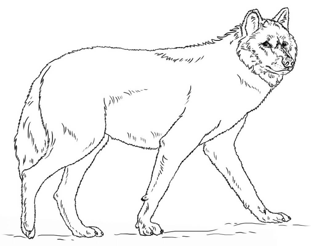 Раскраска дикий волк 11