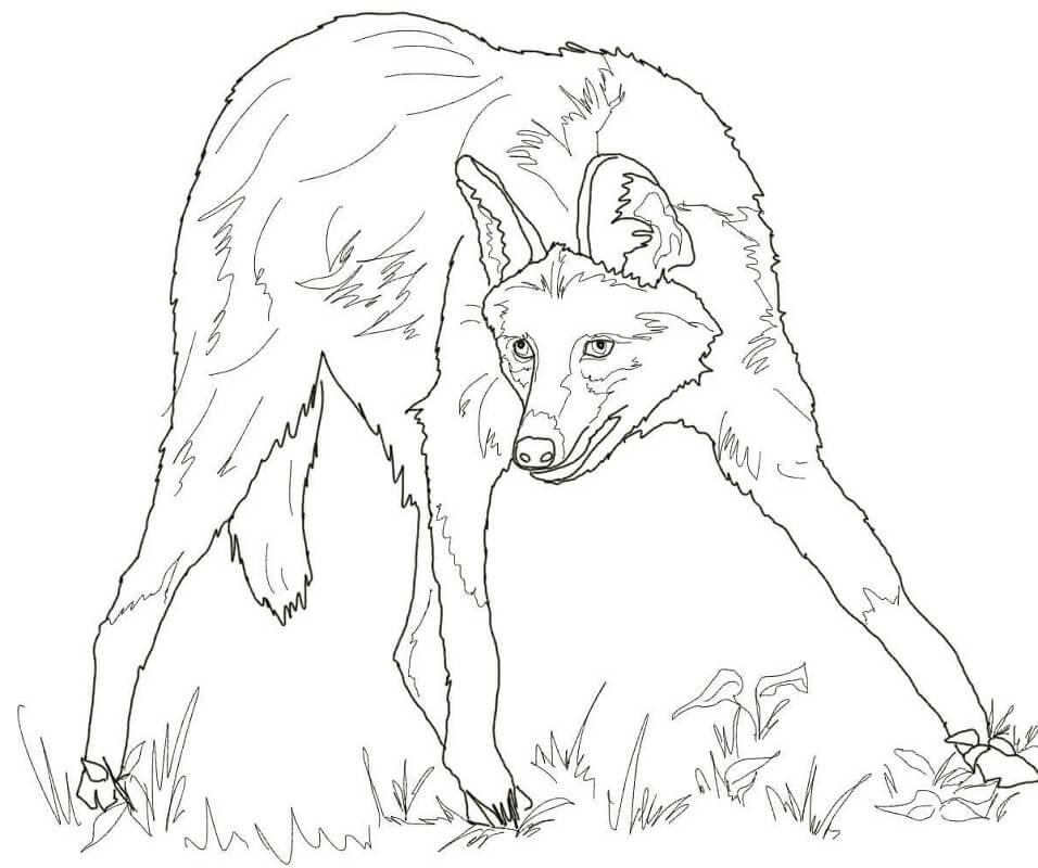 Раскраска дикий волк 12