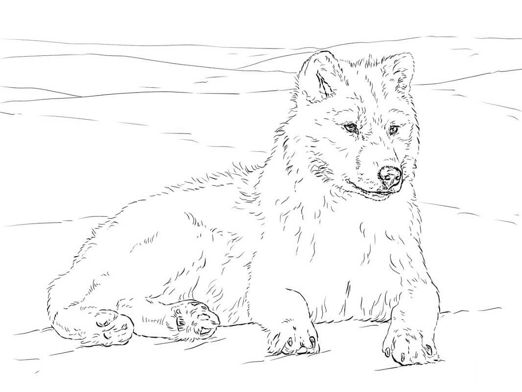 Раскраска дикий волк 13