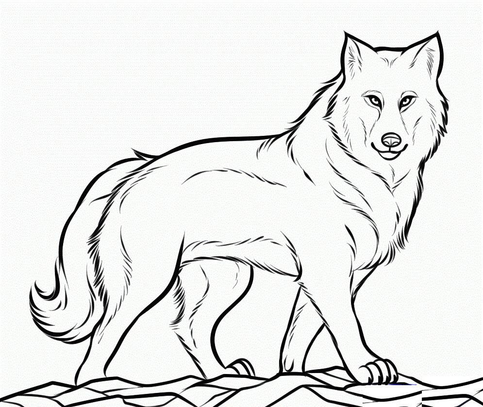 Раскраска Раскраски Волк
