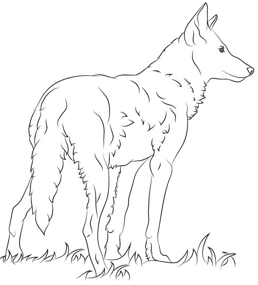 Раскраска дикий волк 16