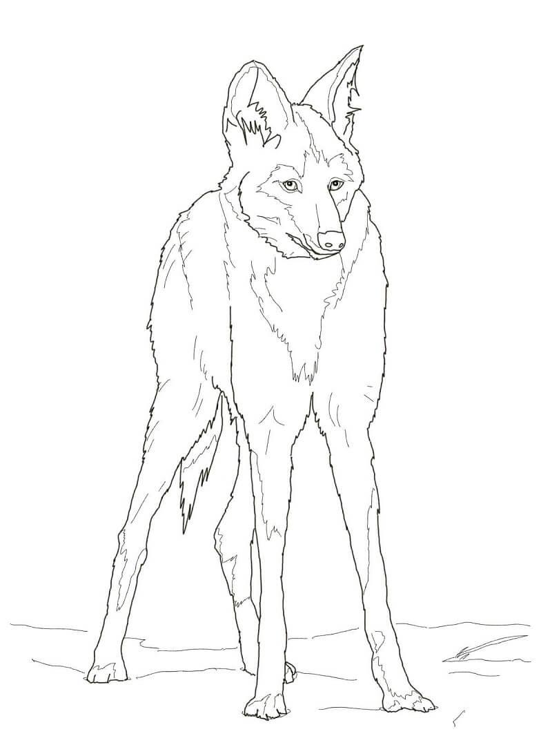 Раскраска дикий волк 2