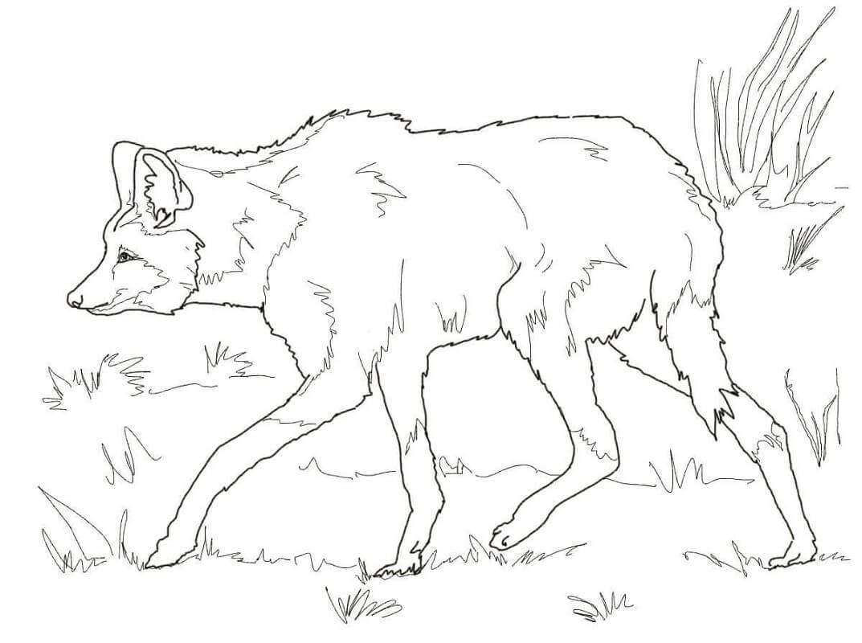 Раскраска дикий волк 3