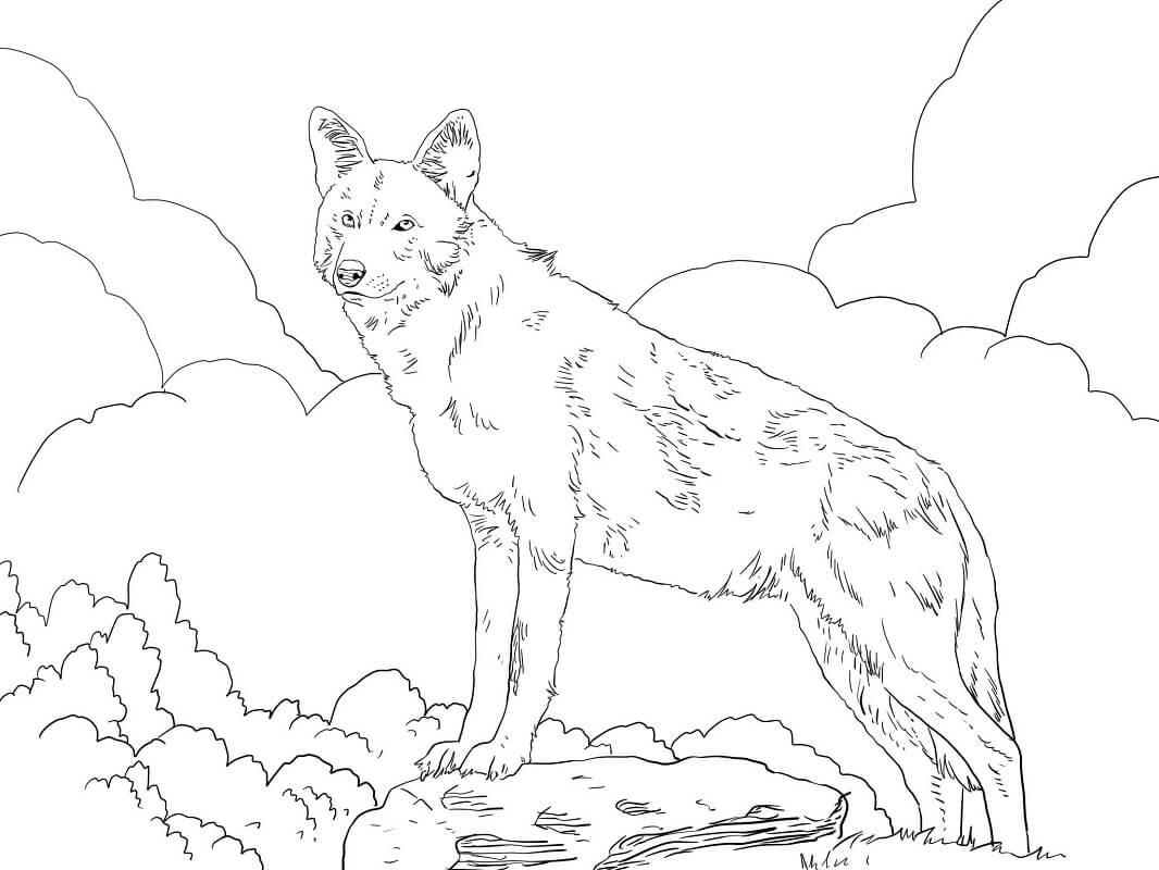 Раскраска дикий волк 4
