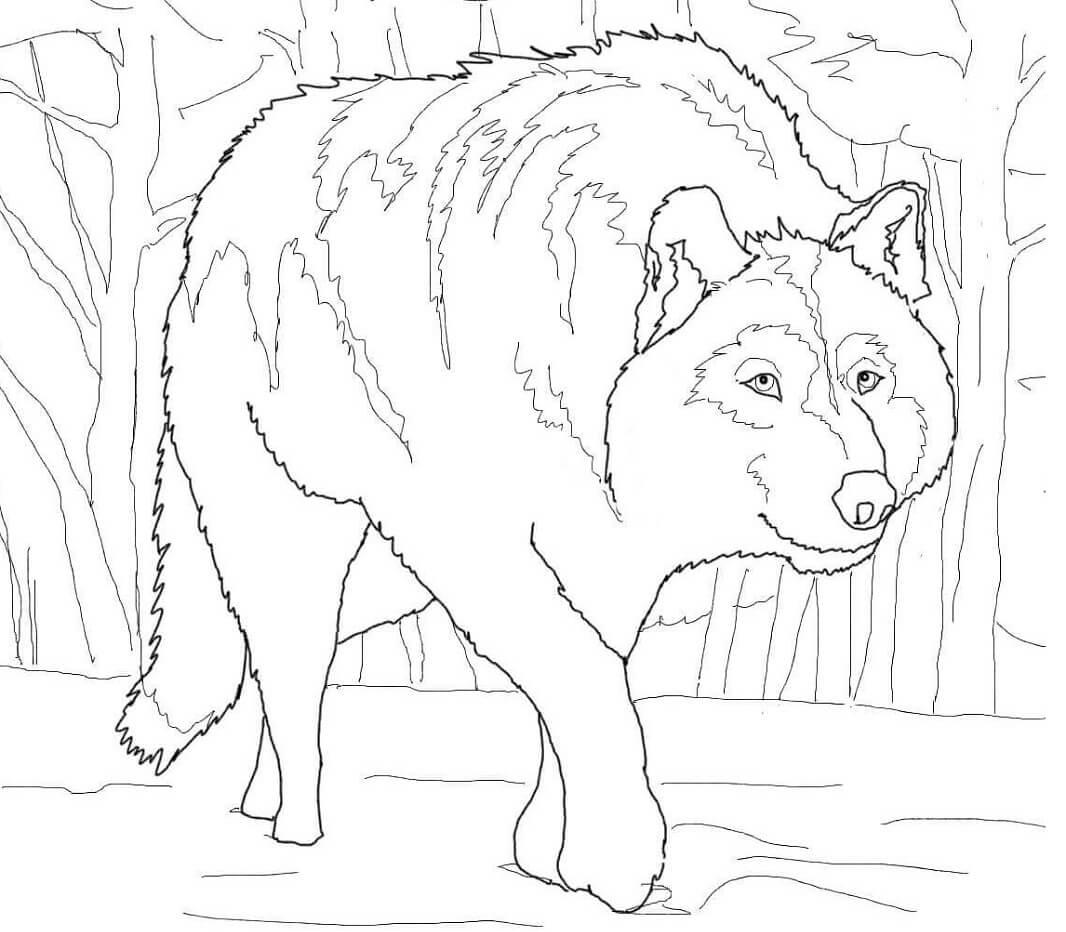 Раскраска дикий волк 5