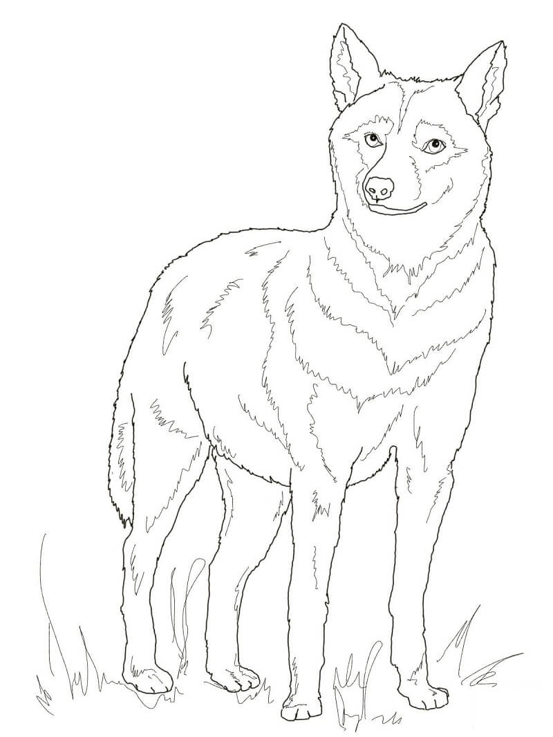 Раскраска дикий волк 6