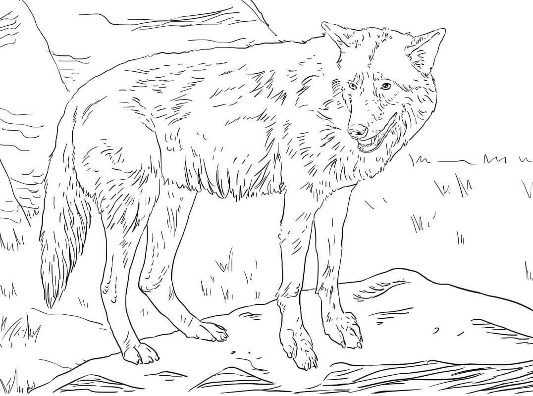 Раскраска дикий волк 7