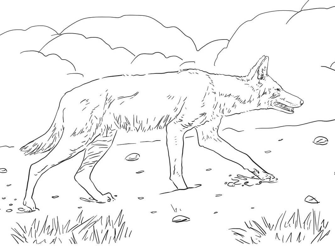 Раскраска дикий волк 8