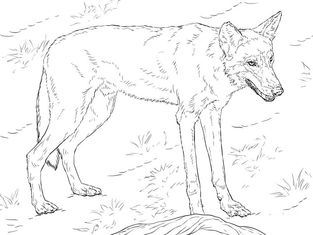 Раскраска дикий волк 9