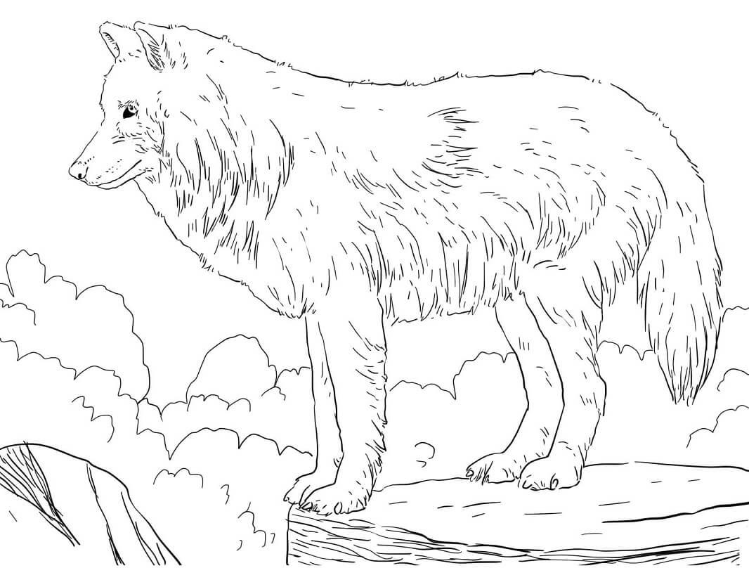 Раскраска дикий волк