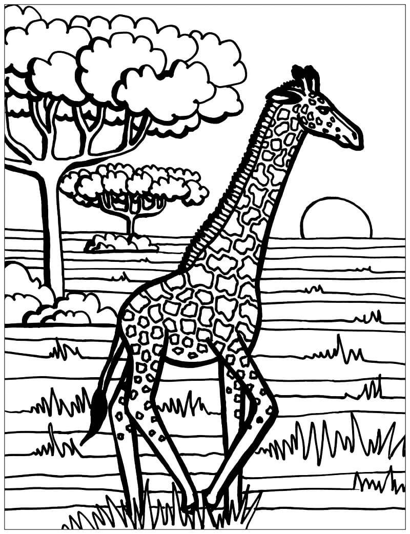 Раскраска дикий жираф 1
