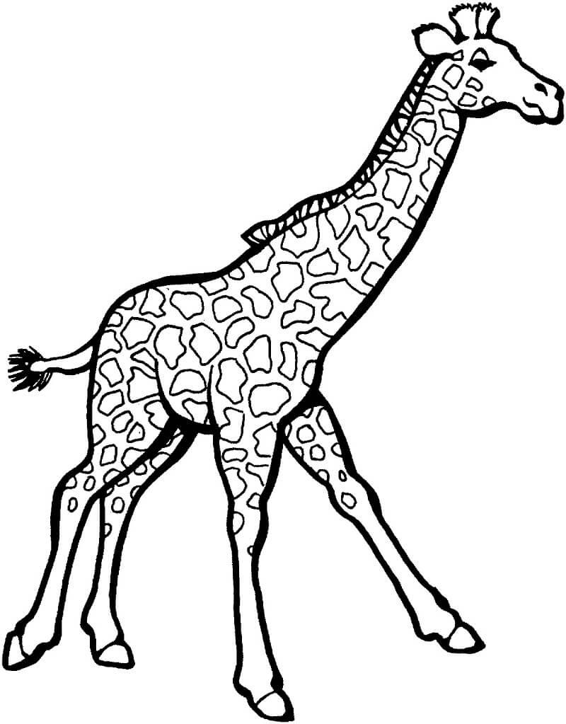 Раскраска дикий жираф 2
