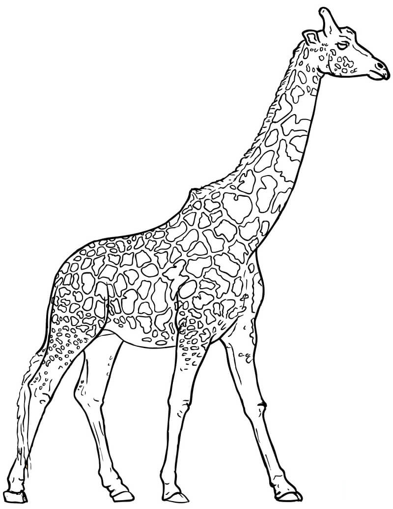 Раскраска Раскраски Жирафа