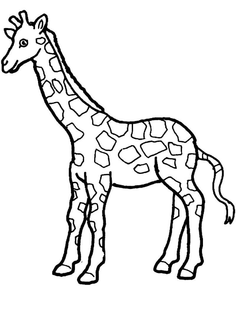 Раскраска дикий жираф 4