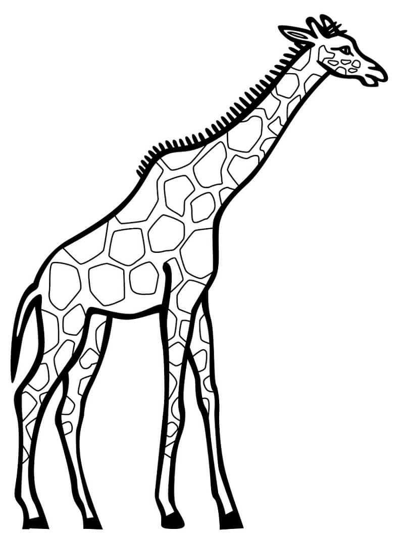 Раскраска дикий жираф 6