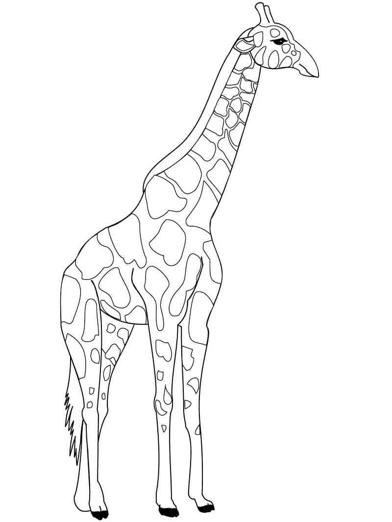 Раскраска дикий жираф