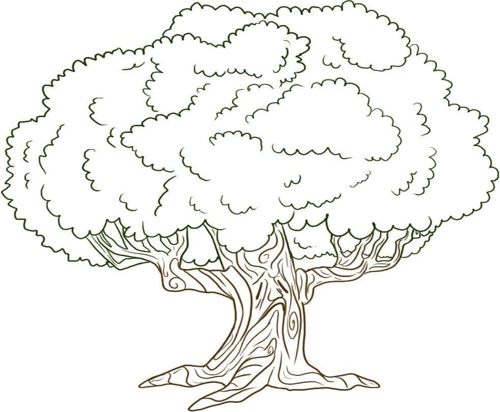 Раскраска Дубовое дерево 1