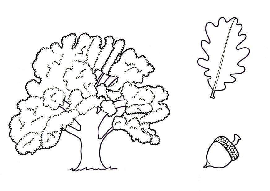 Раскраска Дубовое дерево 2