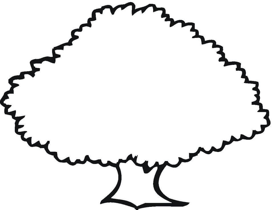Раскраска Дубовое дерево 4