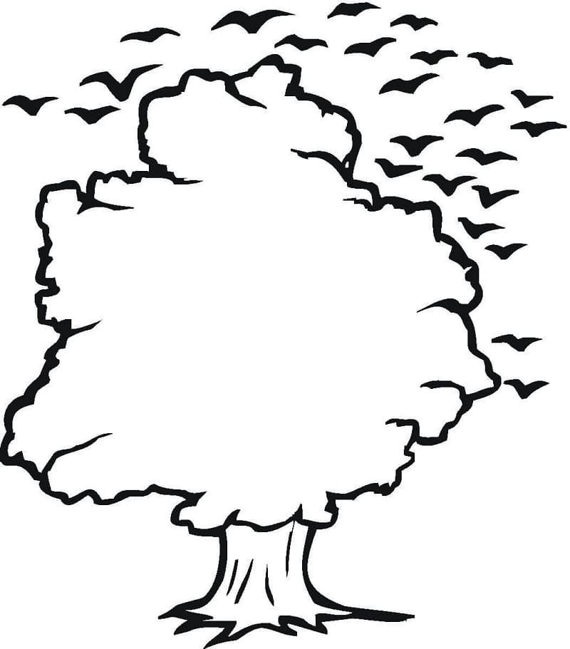 Раскраска Дубовое дерево 5