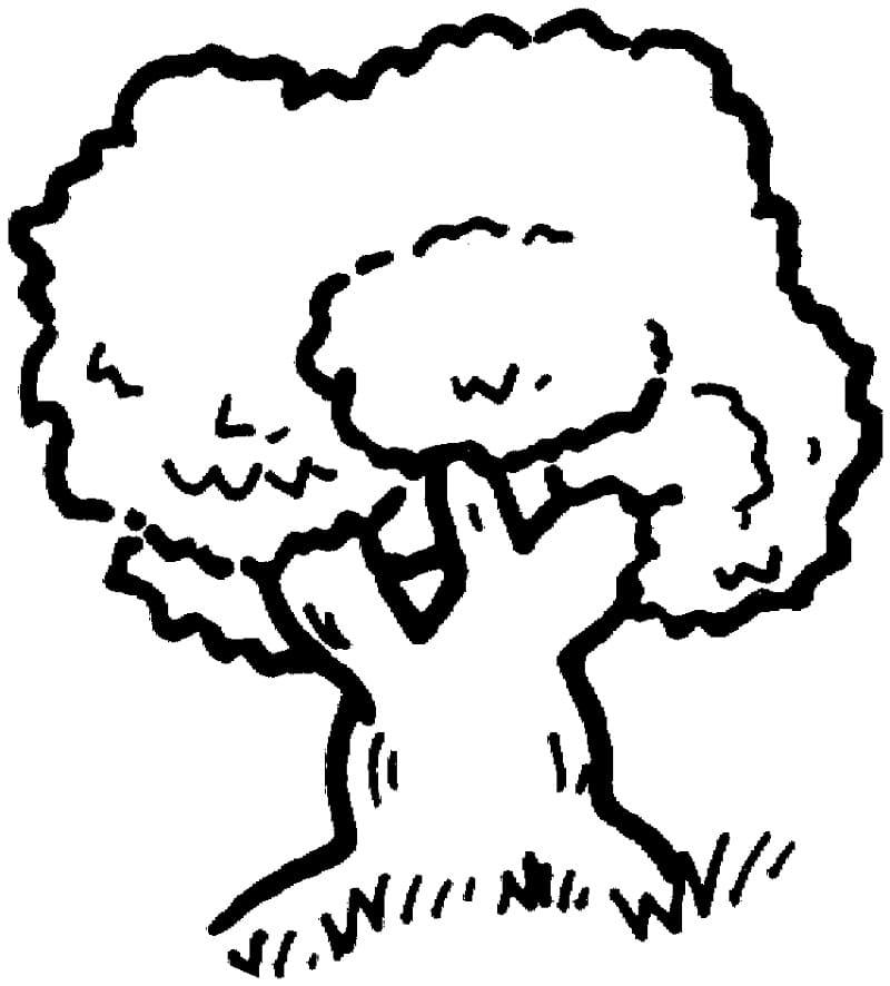 Раскраска Дубовое дерево 6