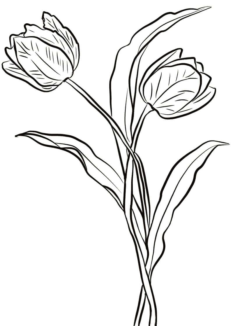 Раскраска два тюльпана 1