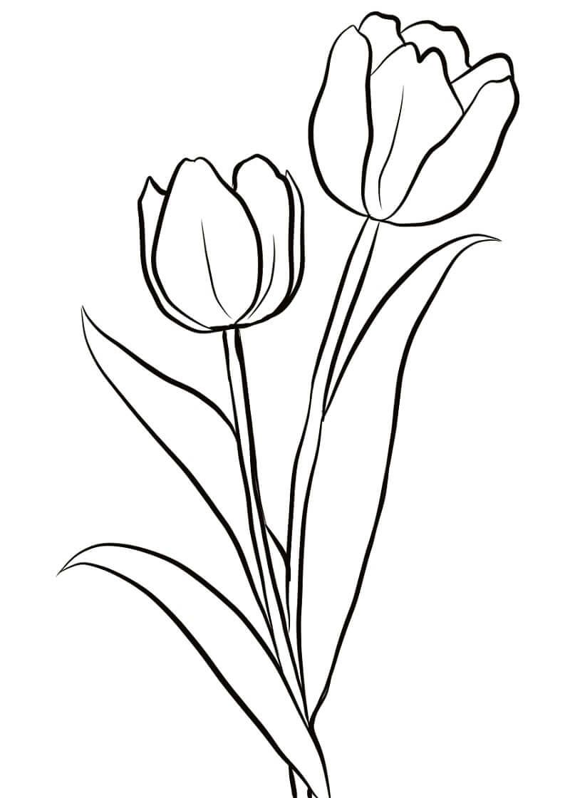 Раскраска два тюльпана