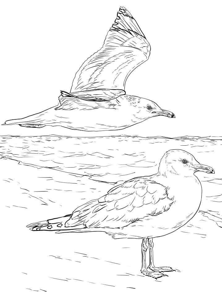 Раскраска две чайки