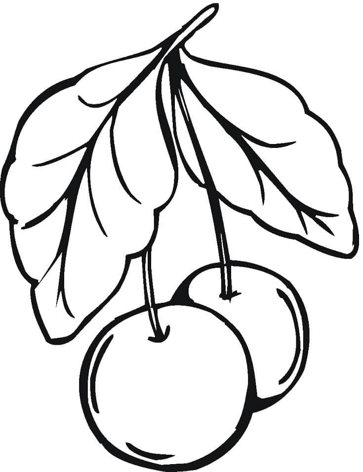 Раскраска две вишни 10