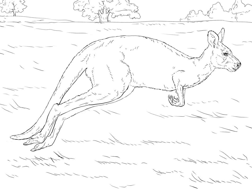Раскраска кенгуру прыгает 1