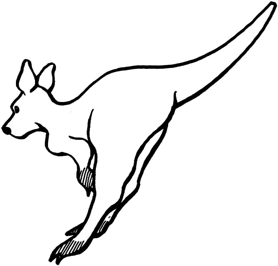 Раскраска кенгуру прыгает