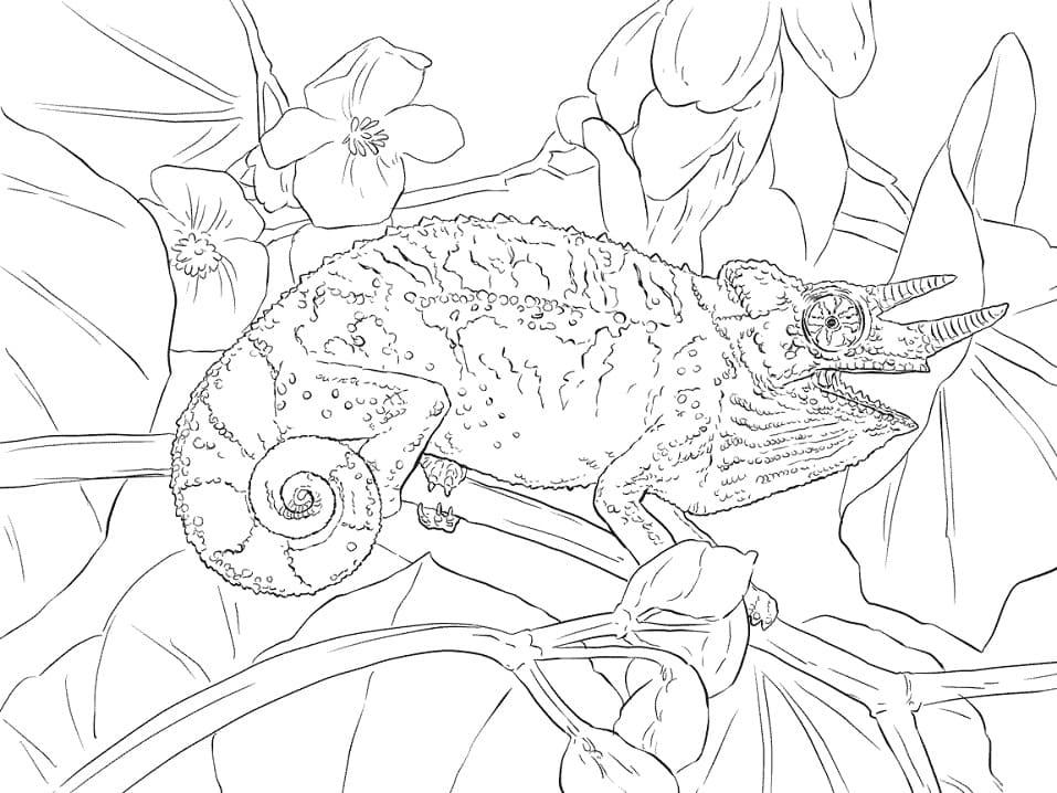 Раскраска Хамелеон 12