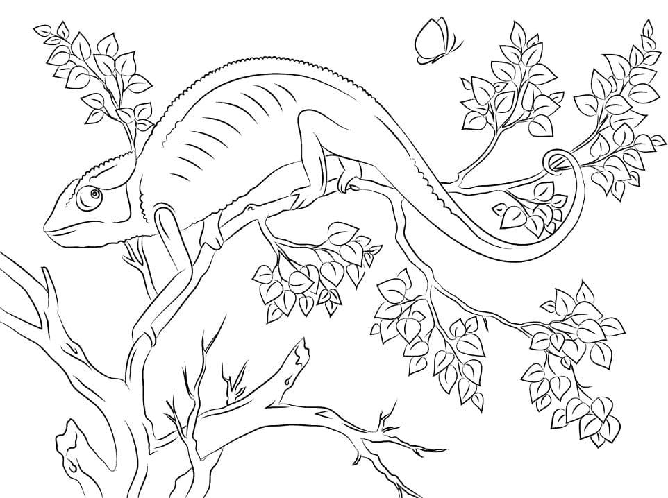 Раскраска Хамелеон 13