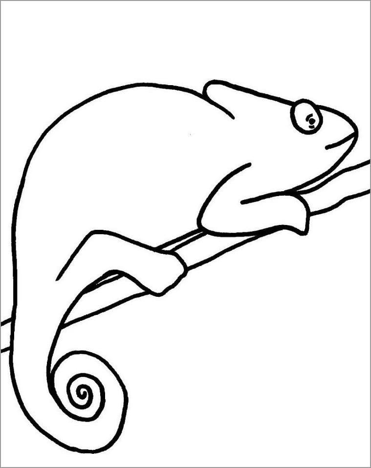 Раскраска хамелеон на ветке 3