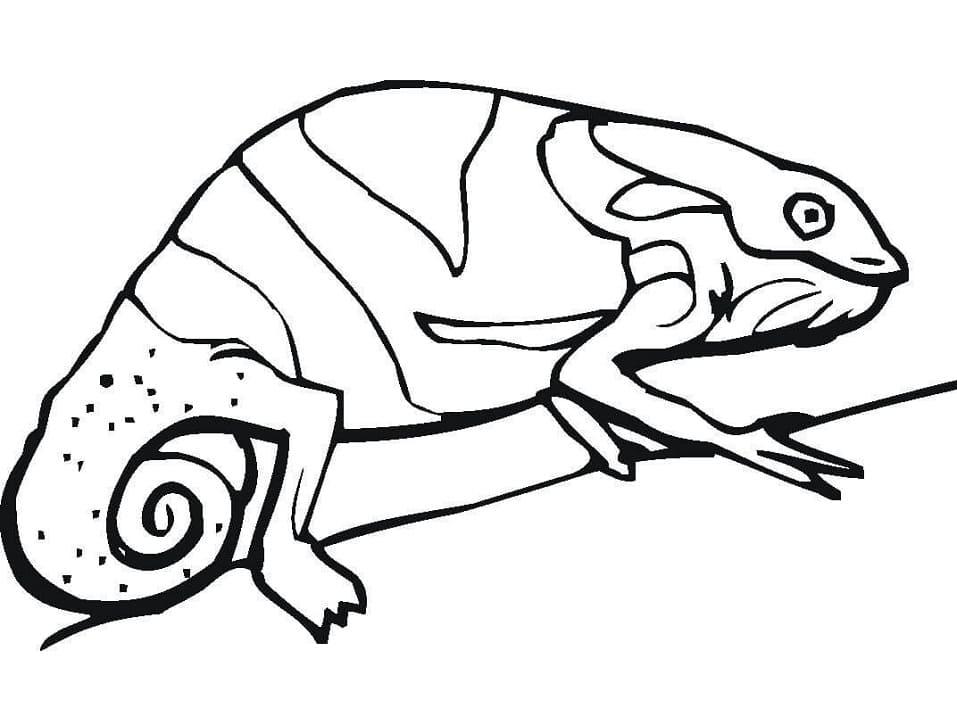 Раскраска хамелеон на ветке 5